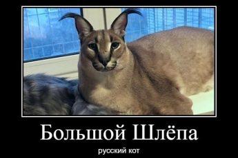 Большой шлепа Флоппа русский кот