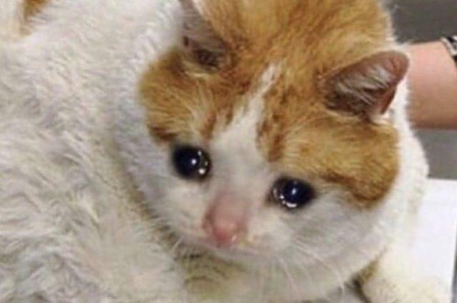 Неплачабрь