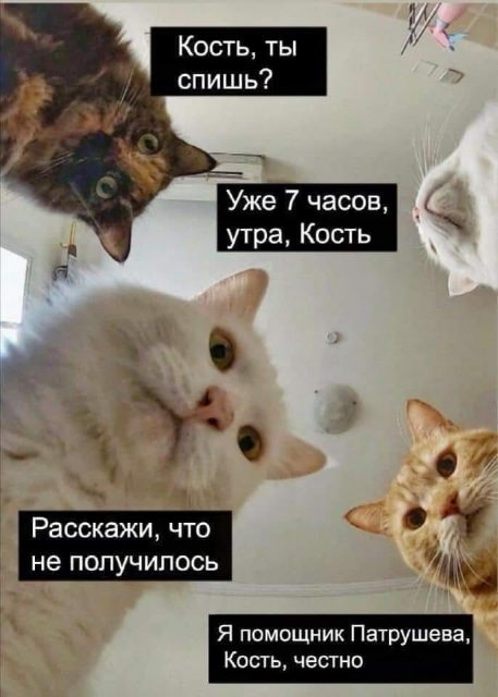 Трусы Навального